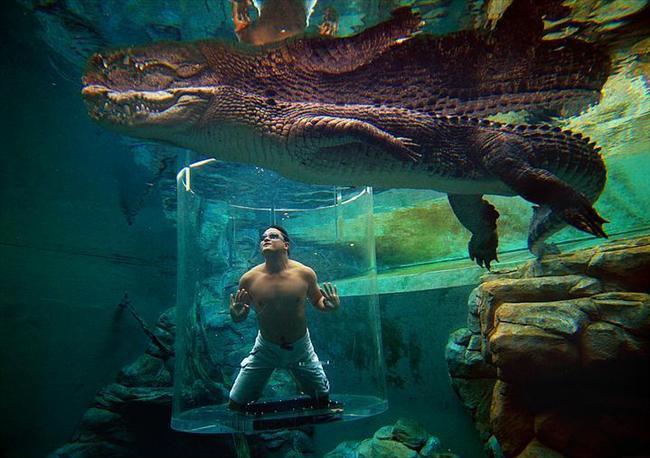 Crocosaurus Cove, Avustralya  Bu havuz ise heyecan arayanlar için Avustralya'da ki tek timsah dalışı yapabileceğiniz havuz.