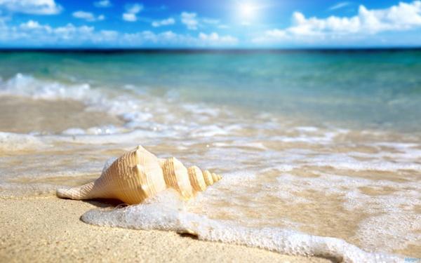 Shell Beach / İngiltere