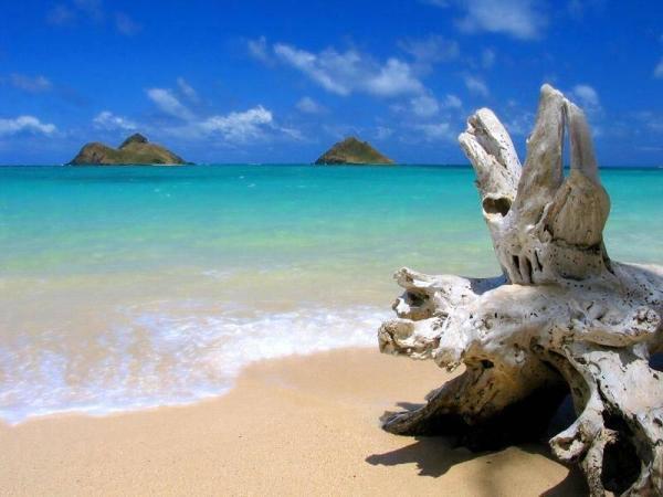 Tobago Kumsalı / Winward Adaları