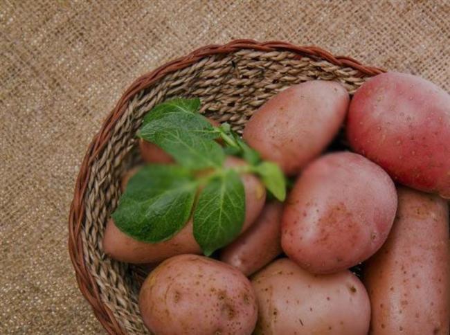 Patates  Çiğ patates suyu mide yanmasının doğal ilacıdır. Patatesi soyup katı meyve püresinde suyunu sıkın. Su, havuç suyu ya da kereviz suyu ile karıştırıp için.