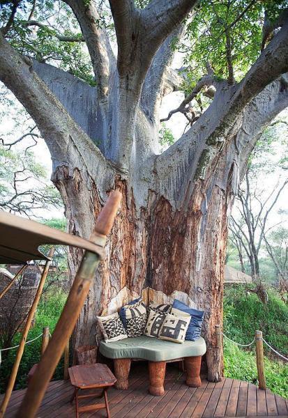 Ya da sadece bir ağacın gölgesinde...