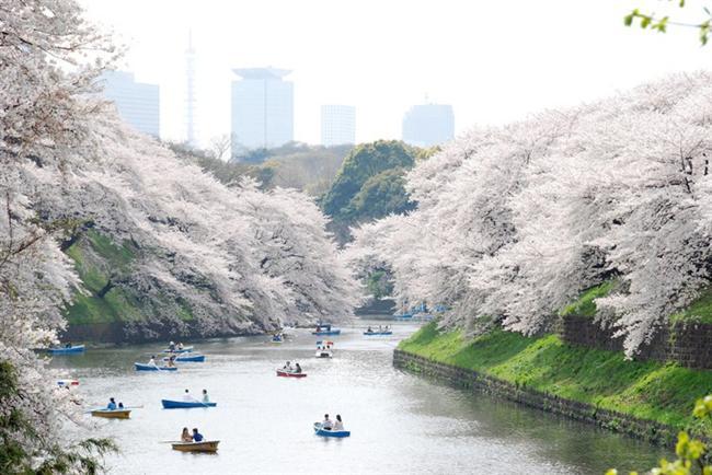 Tokyo, Ueno Park  1873 yılında açılan Ueno Park, 133 dönümlük bir arazi üzerine yerleşiyor. Batı'daki örneklerinin ardından, Batı medeniyetinden esintiler almak amacıyla Meiji döneminde yapıldı. Yılda ortalama 10 milyondan fazla ziyaretçi bu parkı görmeye geliyor.
