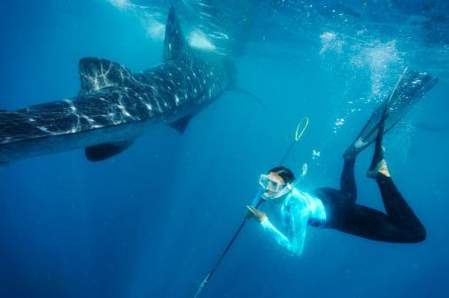 Balık (20 Şubat-20 Mart):  Çok yönlü insanlar olan ve hayallerinin peşinden gitmeyi seven Balık'lardan sıklıkla şifacı, şair, ressam, dalgıç çıkar.
