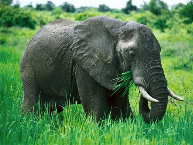 -Filler zıplamayan tek memelidir.