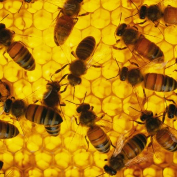-Yarım kilo bal yapabilmek için arılar iki milyondan fazla çiçekten bitki özü toplamak zorundadırlar.