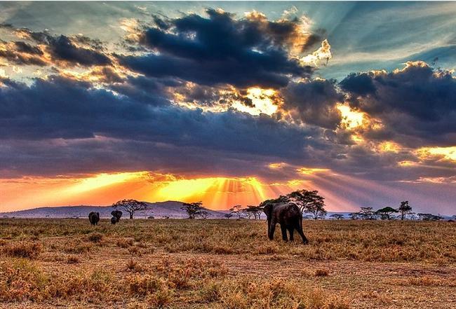 Serengeti Milli Parkı - Tanzanya