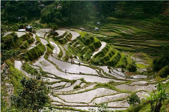 Banaue Pirinç Tarlaları - Filipinler