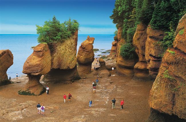 Fundy Körfezi, New Brunswick