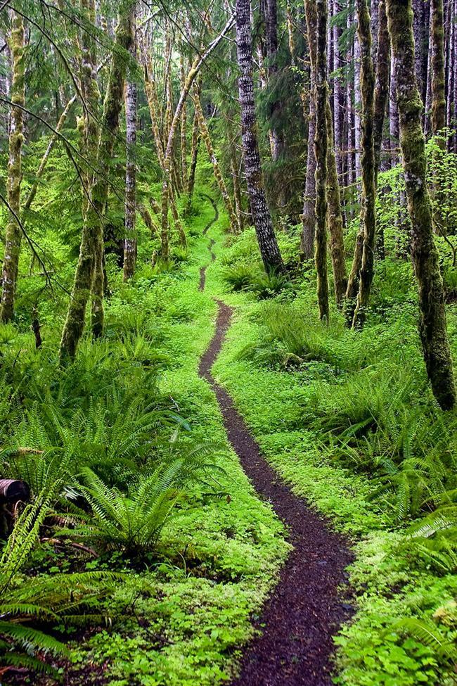 Aurora Ridge Yolu, Sol Duc Valley, Washington