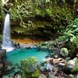 İnsanı Güzelliğiyle Mest Eden 10 Yağmur Ormanı - 1