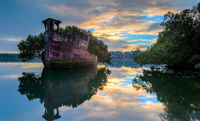 Yüzen Orman, Sidney Avustralya