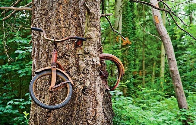 Ağaç küçükken bağlanmış ve orada unutulmuş bir bisiklet