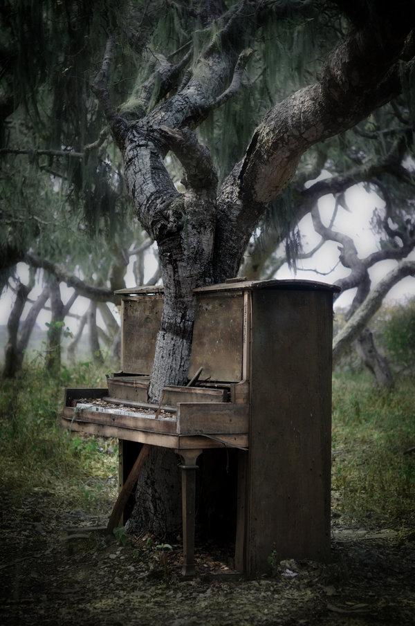 Terk edilmiş bir piyanonun içinde büyüyen ağaç