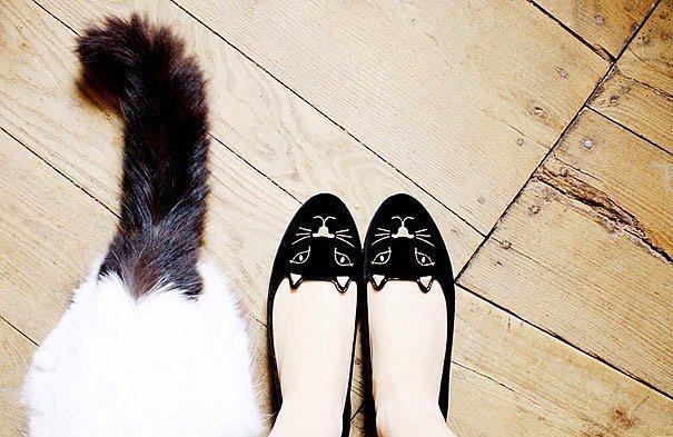 Kedi babet
