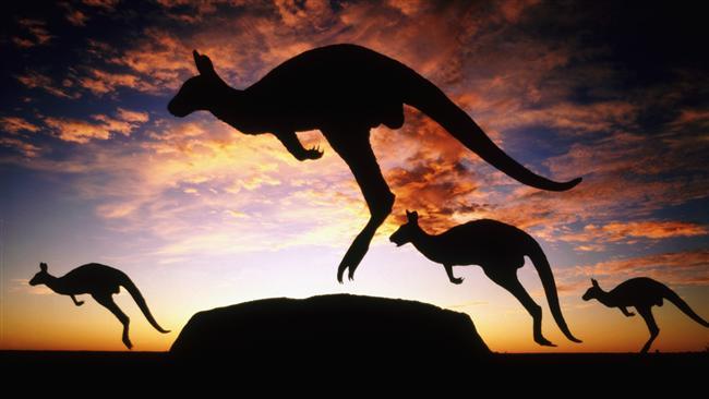 Bir kanguru grubu İngilizce'de 'mob' yani 'çete' olarak adlandırılır.