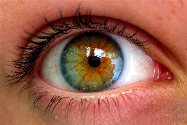 Burun ve kulaklarımız hayatımız boyunca büyümeye devam ederken, gözlerimiz hiç büyümez.