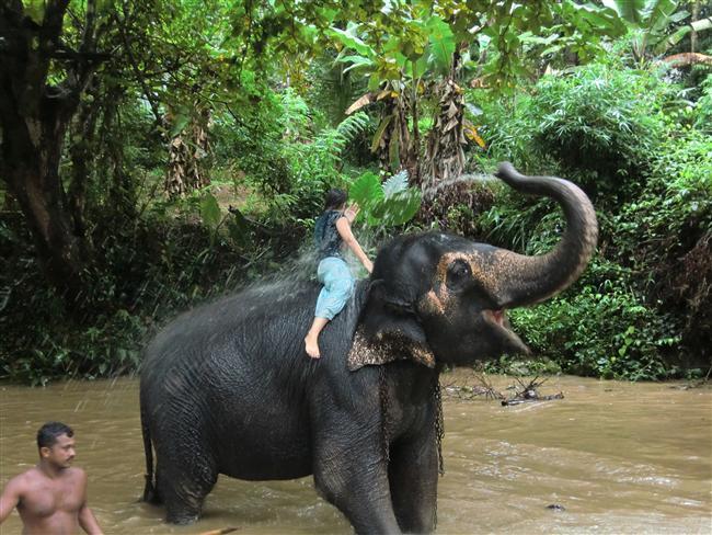 Filin gazabı  Hindistan'ın Assam eyaletinde, pirinç birası içip sarhoş olan 12 fil, 3 kişiyi ezerek öldürdü, 2 kişiyi de yaraladı.Resmi rakamlara göre, Assam eyaletinde son 5 yılda filler en az 150 kişiyi ezerek öldürdü.