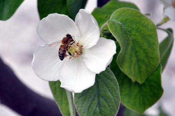 6.Aslında, doğadaki durgunluk; bahara hazırlanmak, yazın yine coşmak için bir dinlenme süreci.