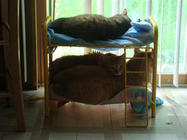13. Kediler İçin Mini Yatak Odası