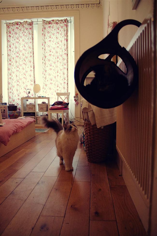4. Kalorifer Kedi Yatağı