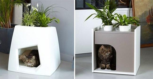 6. Kedi Evi Saksı