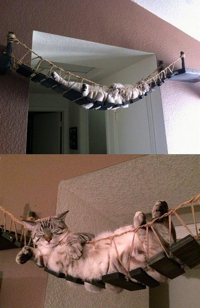 8. Indiana Jones Kedi Köprüsü