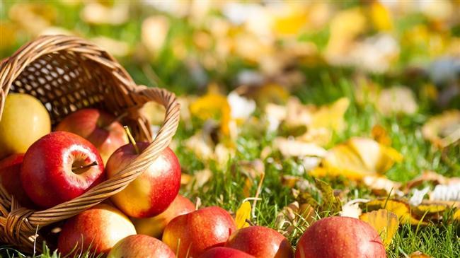 5- Elma  Elmasız diyet olur mu? Elma da yeşil mercimek gibi bir lif kaynağıdır. Uzun süre tok tutar, az kalorilidir.  Elmanın içindeki ursolik asit de kilo verdirme konusunda etkili olduğu yapılan çalışmalarla ispatlanmıştır. Çikolata değil, gofret hiç değil, elma yiyin. Farkı göreceksiniz!