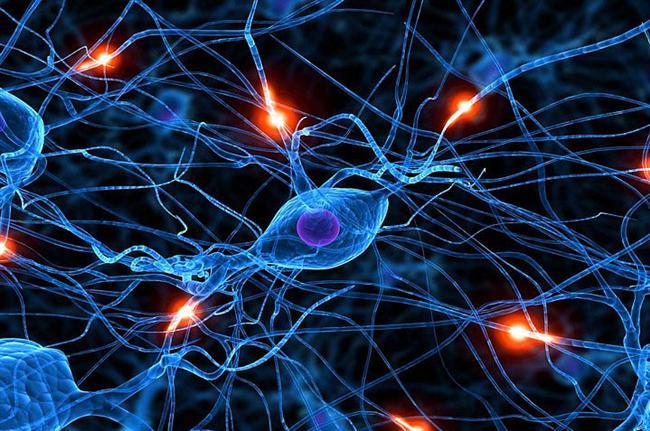 İnsan Beyni Hakkında Bilmediğiniz 43 Gerçek - 1