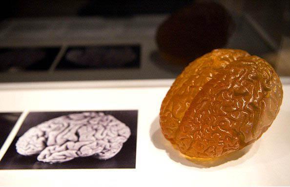 18. Teorik fizikçilerin teorisine göre beynin boyutu bir farklılık yaratmıyor. Örneğin Einstein'ın beyni 1.21 kilo ağırlığındaydı, ortalamadan bir hayli düşük.
