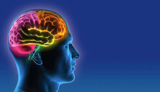 19. Aslında beynimiz evrim sürecinde sürekli küçüldü (hala küçülmekte) ve bu esnada verimliliği de arttı.