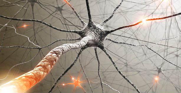 20. İnsan beyninde sinir uyarılarını ileten aksonlar 160.000 kilometre uzunluğunda. Yani dünyanın etrafında dört tur atabilir.