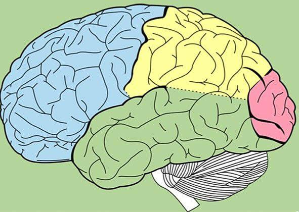 İnsan Beyni Hakkında Bilmediğiniz 43 Gerçek - 23