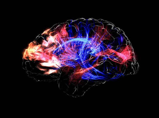 34. Parçacıkların içeri girmesini engelleyen kan-beyin bariyeri beynimizi yaralanmalara ve hastalıklara karşı koruyor fakat aynı zamanda nörolojik hastalıkların tedavisini oldukça zor hale getiriyor.
