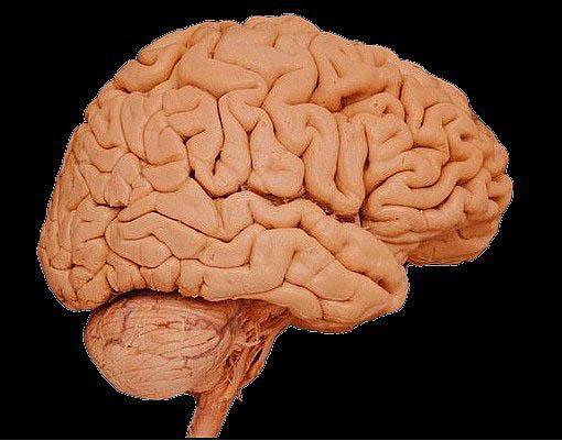 İnsan Beyni Hakkında Bilmediğiniz 43 Gerçek - 35