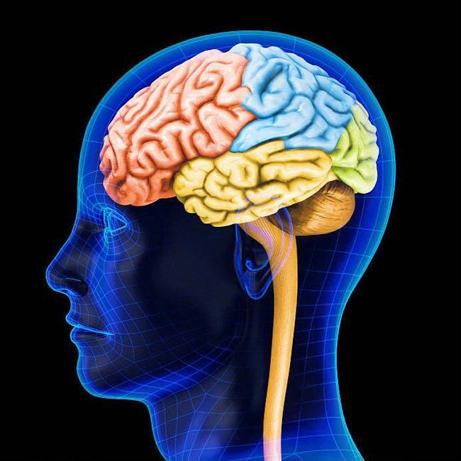 36. Beynin kumayı kontrol eden postrema bölgesi, kan-beyin bariyerine duyarsız olan tek bölge. Böylece postrema kanımızdaki zararlı maddeleri farkedebiliyor.