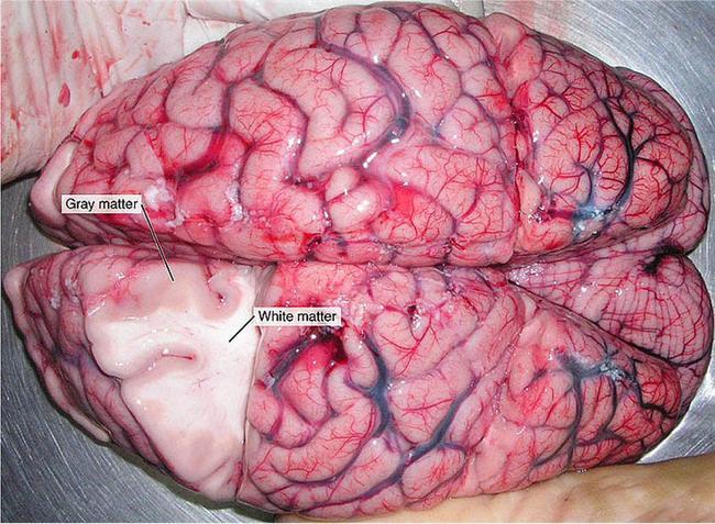 İnsan Beyni Hakkında Bilmediğiniz 43 Gerçek - 5
