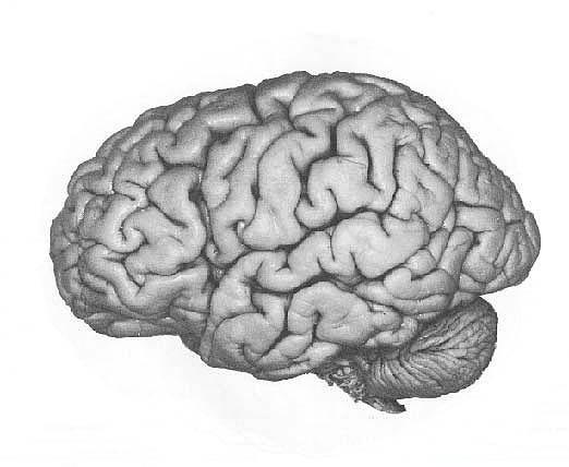 6. Gri maddenin çok olması kişinin dil yeteneklerinin çok gelişmiş olması anlamına geliyor.