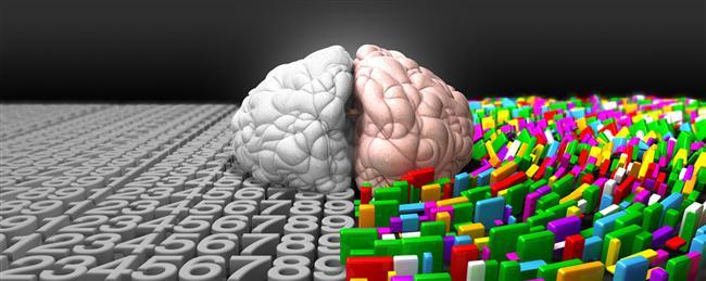 22. Beynin prefrontal korteksi oldukça elastiktir ve böylece herhangi bir zarar durumunda oldukça önemli olan ön lob korunmaktadır.