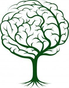 3.Beyniniz 40'lı yaşların sonuna kadar gelişmeye devam eder.