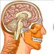 Beyin Hakkında 24 Şaşırtıcı Gerçek - 7