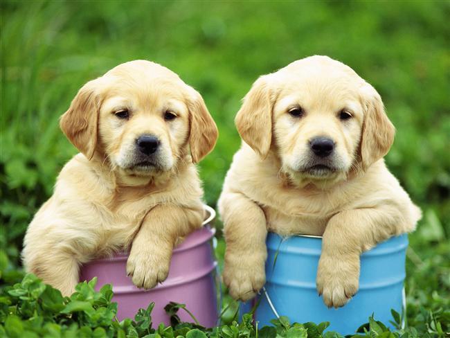 Köpek   Genel Özellikleri : Dürüst, Şefkatli, Açık Fikirli, Yansız, Nazik, Zeki kavrayışlı.   Çin takvimine göre Köpek yılında doğanlar rahat davranışlı, kibar, başkalarını düşünen, sıkıntıda olan dostunu asla yalnız bırakmayan insanlardır. Çin'de Köpek tanımı çok olumludur ve bu hayvan güzel ve zeki bir yaratık olarak kabul edilir. Bu insanların felsefesi, kendine yapılmasını istemediğin şeyi başkalarına yapma şeklindedir.    Bunlar aynı zamanda doğruluk ve adaletin simgeleridir. Köpek yılında doğan birisine sonuna kadar güvenmeliyiz. Eğer birisi ile sağlam bir dostluk kurmuşsa, bu durum hayatının sonuna kadar sürecektir.    Bu insanlar doğal olarak yabancılara önce şüphe ile yaklaşan ve dost olmakta acele etmeyen tiplerdir. Başkalarına ağır yaklaşmış olsalar da bir kere ısındılar mı arkadaşlıkları devamlıdır. Köpek yılında doğanlardan aşkta en vefalı ve bağlı insanlar çıkar. Bunlarla olumsuz ilişkiler kuracak olanlar Ejderha yılında doğanlardır. Bundan başka Horoz yılında doğanlar ile anlaşmaları zordur. Bunlara en uygun kişiler At ve Kaplan yılında doğmuş olanlardır.  Yazan: Astrolog Şenay Yangel