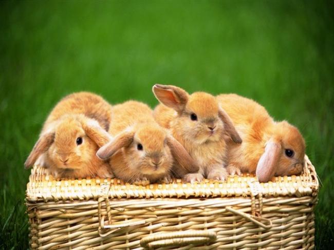 Tavşan   Genel Özellikleri : Talihli, Cömert, Kibar, Kültürlü, Sanatkar, Duyarlı Hayvan yılları arasında en talihli olanlardan biri budur. Bu insanlar, pek çoğumuzu harap edecek sıkıntılar içinden yara almadan sıyrılmayı becerirler. Tavşan yılı insanı kavgaya meraklı değildir. Bunun yerine sorunları tartışıp anlaşarak çözmeyi yeğler. Karşı fikirde olanları ikna ederek kendi safına çeker. Barış taraftarı olması onun zayıf olduğunu göstermez. Bunlar savaşmak zorunda kalırsa cesur ve yiğittir. Bu insanların en zayıf tarafı aniden öfkelen insanlardır. Bu durum başka insanları çok şaşırtır.   Bu kişiler aşk ve evlilikte fiziki heyecanı üstün tutan ve duygusal yanları güçlü insanlardır. Bunun yanında rahata ve konfora da düşkündürler. Geçici ilişkilere sevimli bakarlar ve uzun süreli bağlılıklardan ürkerler. Evlenmeyi göze alması için her yönden aradığını bulması lazımdır. Tavşan yılında doğan kişiler Horoz ve Kaplan yılında doğanlar ile uyum sağlamakta zorlanır. Bunlar için en uygun beraberlikler Koyun ve Domuz yılında doğmuş olanlardır.