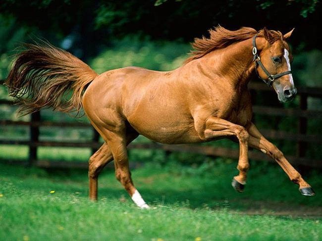 At   Genel Özellikleri : Serüvenci, Gözü pek, Güler yüzlü, Toplumcu, Herkesin beğendiği.    At yılında doğan kişi görünüşte öfkesi burnundan soluyan, üzerinde duramayan bir mizaçta gözükse de, çok kişi tarafından sevilen bir yaradılıştadır. Bunları iyi tanıdıkça hoşa giden bir tarafları bulunur. Başkalarının sevgisi ve düşünceleri bu insanlar için hayati önem taşır.    Davranışlarında hoş ve kibar gözüken taraflar vardır ama, aniden köpürüp ortalığı kırıp geçirmesi de olağandır. Bunlar için en önemli konu özgürlükleridir. Bencil bir davranışla başkalarının düşüncelerine aldırmadan kendi isteklerini ön planda tutarlar. Sempatik olmalarına ilaveten gizemli yanları ile seçtikleri kariyerde başarıya ulaşırlar.    At yılında doğanlar çabuk ve kolayca aşık olurlar. Aynı çabukluk ve kolaylıkla da aşklarını unuturlar. Ne yapacakları belli olmadığından gerilimli bir hayat ortağı sayılırlar. Eşlerini değiştirmeleri de kolayca yapıldığı izlenir. At yılında doğanların en az anlaşacakları insanlar fare yılında doğanlardır. Aynı şekilde yılan ve Tavşan yılında doğanlar ile geçinmeleri zordu. En uyumlu beraberlikleri Köpek ve Kaplan yılında doğanlar ile yaparlar.