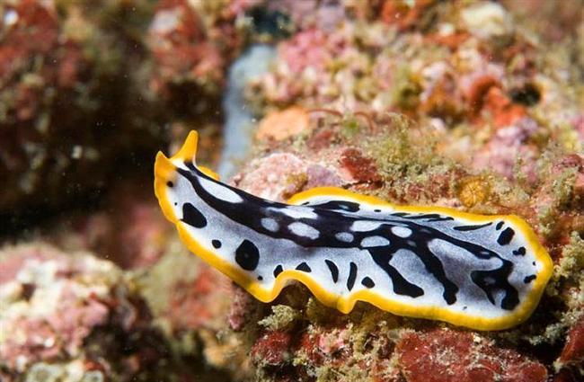 14. Deniz Solucanı  Bu hayvanların dişileri de erkekleri de hermafrodit, yani çift cinsiyetli. Çifleşme sonucu kim kaybederse, o hamile kalıyor.  Kaynak: Onedio
