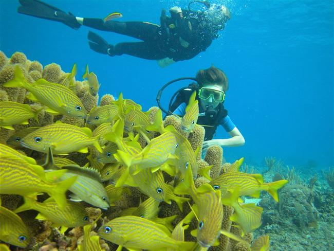 """""""Balık"""" adamlarSezgisel ve romantik bir su burcu olarak bilinen Balıklar'a, denizin derinliklerini keşfetmeleri için dalgıçlık kursu öneriyoruz. Denizlerinde yaptığı dalgıçlık deneyimleri sayesinde Balıklar, su altını yakından görebilme, profesyonel dalgıç eğitmenler tarafından bilgilendirme imkanı buluyorlar. Rengarenk balıkları, bitkileri ve daha fazlasını yakından görebilir, unutulmayacak anlar yaşayabilirsiniz. Haydi Balıklar, yeryüzü size göre değil; yuvanıza, ait olduğunuz denizlere dönme vakti geldi..."""