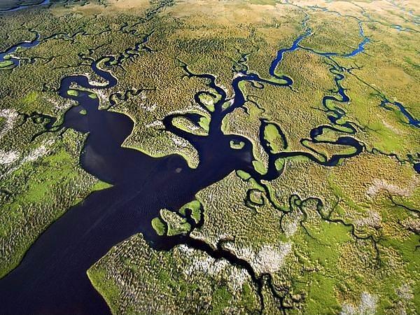 Everglades, Florida  Güney Florida'da bulunan bu tropik bölge birçok çiçeğe ve nadir bitki türüne ev sahipliği yapıyor. Son derece nadir bulunan Florida Panteri de burada yaşıyor. Ancak artan nüfus, çevre kirliği, vs. derken bu bölge yok olma tehlikesiyle karşı karşıya. Gelecek neslin de görebilmesi için büyük çabalar sarf ediliyor.