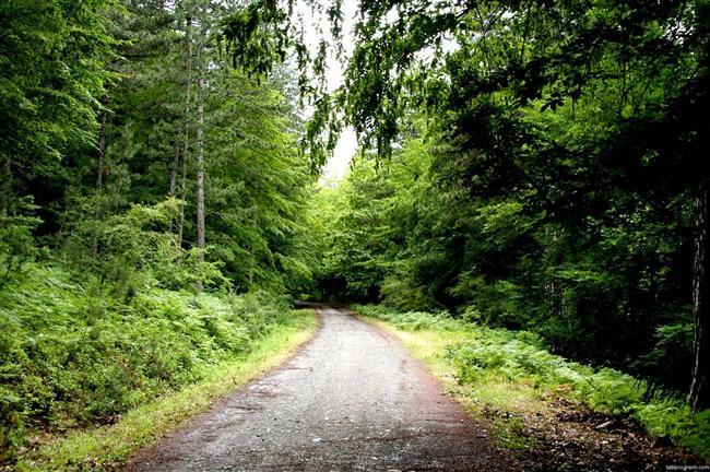 KAZ DAĞLARI  Nefis bir manzaraya karşı Milli Parkı ziyaret edin. Küçük ama tertemiz pansiyonlarında kalın. İsterseniz ağaç evleri deneyebilirsiniz.