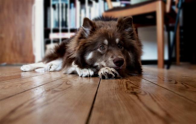 Kova köpeği, aman dikkat!  Bu köpekler deli dolu olur. Bir ruh halinden diğerine çok çabuk geçer. Söylediklerinizi yapması biraz zaman alabilir. Çünkü o bildiğini yapmayı sever. Sık sık yemek kabının yerini değiştirmenizden hoşlanır.  Durmadan oradan oraya taşırsanız da onun için fark etmez. Sahiplerinin kim olduğunun bilincine geç varır. Eşiniz, dostunuz herkesi sahiplenebilir. Komiktir.