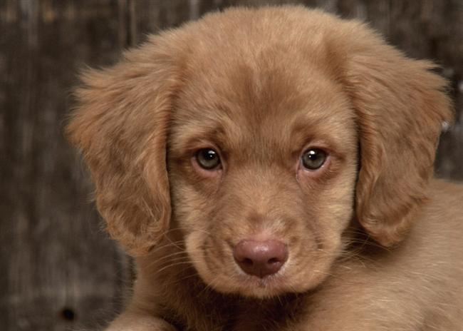 Başak köpeği  Başak köpeği çok iyi koku alır. Bir eşyanızı kaybederseniz ona başvurabilirsiniz. Ona bir ilaç içirmek için mamasına koyup verirseniz; mamayı yiyip ilacı bırakır.  Kısaca bu köpeği kolay kolay kandıramazsınız. Söylediğiniz herşeyi hemen anlar ve uygular. Yemek kabının, yattığı yerin, su kabının yerini sakın değiştirmeyin. Bundan hiç hoşlanmaz ve tuhaf davranışlarda bulunabilir.