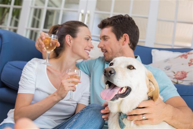 15. Çocuklarla veya hayvanlarla ya da her ikisiyle birlikte vakit geçirin.